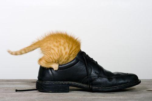 Причины возникновения неприятного запаха обуви